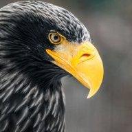 Tragic-Eagles